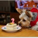 静岡県 ミッキー君  2014.9.26      2歳のお誕生日おめでとう