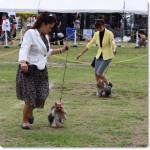 2914.8.24 御殿場愛犬クラブ展にてユム&ロロ姉妹 ユムちゃんオーバースペシャルにて1枚目のカードGET