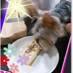 福岡県  ぐら君      2歳のお誕生日おめでとう