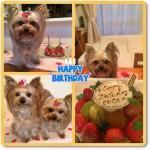 ココアちゃん    5歳のお誕生日おめでとう