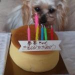 2014.3.21      夢夢ちゃん15歳のお誕生日を迎えました